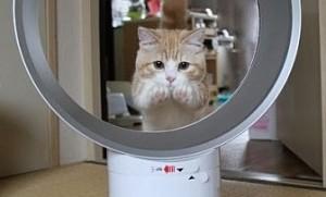 猫輪くぐりダイソン